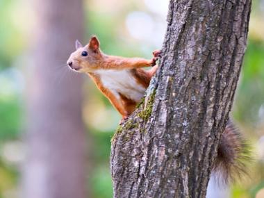 Wald mit Eichhörnchen